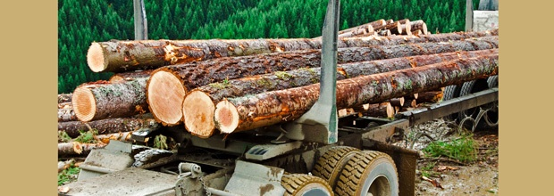Timber Industry Exemptions from the New Manufacturing Overtime Rule